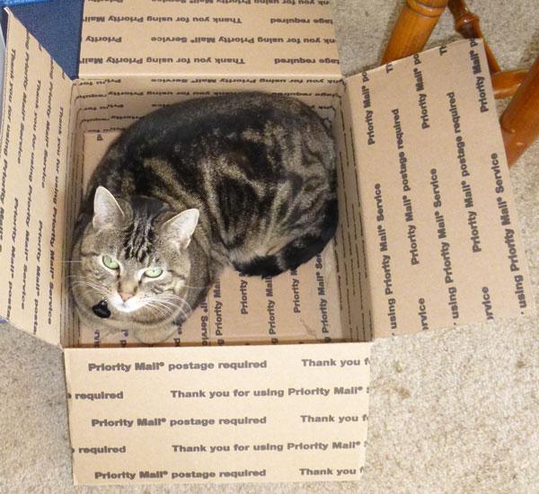 bee-mailing-box